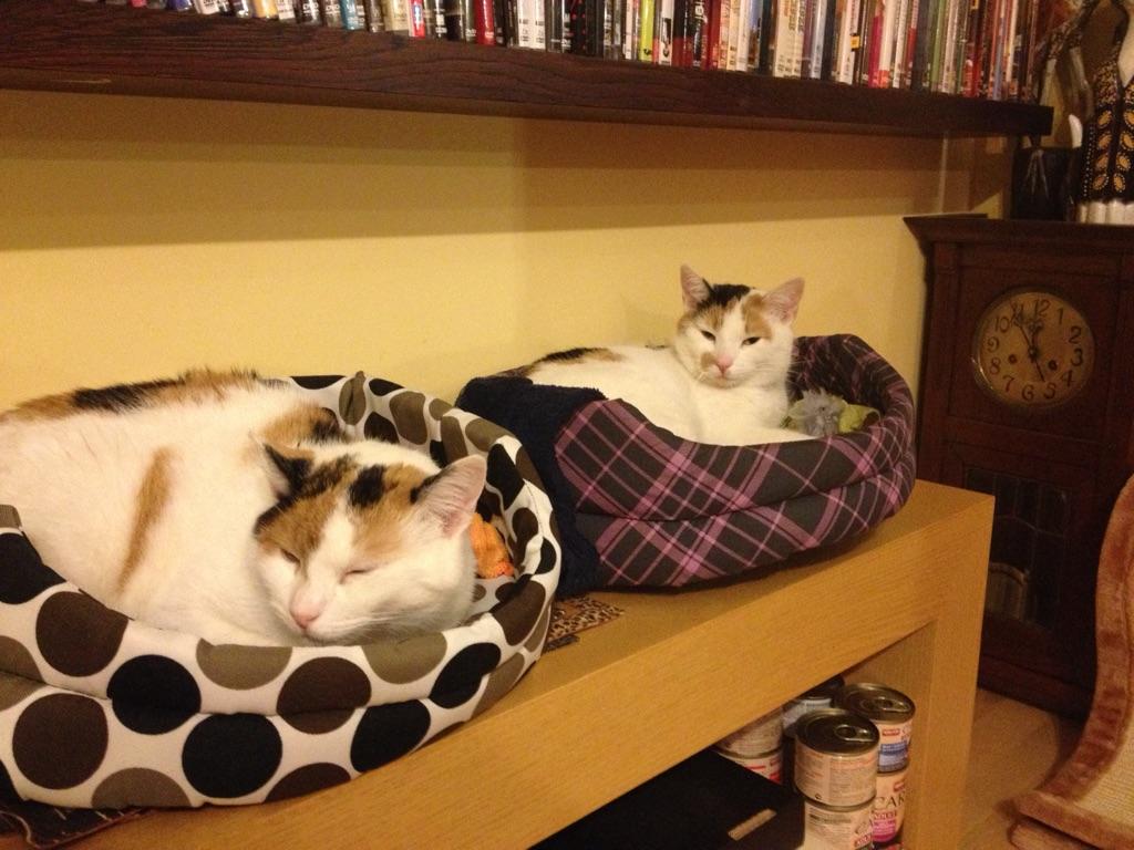 Pozdrowienia od Scarli i Lilu :)