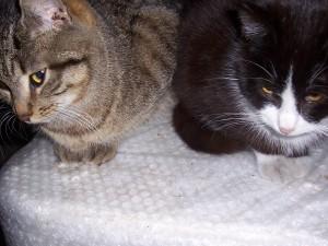 Po lewej Książe, po prawej- Tofik (wiek okoBo 8 miesięcy, kot pełen energii, rozrabiaka).
