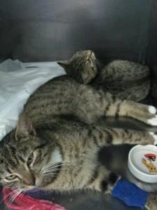 koty hospitalizowane
