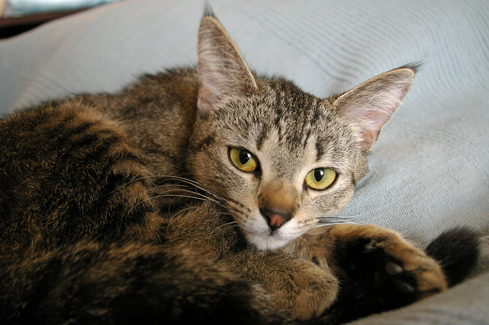 Molly – kotka ze złamaną łapką