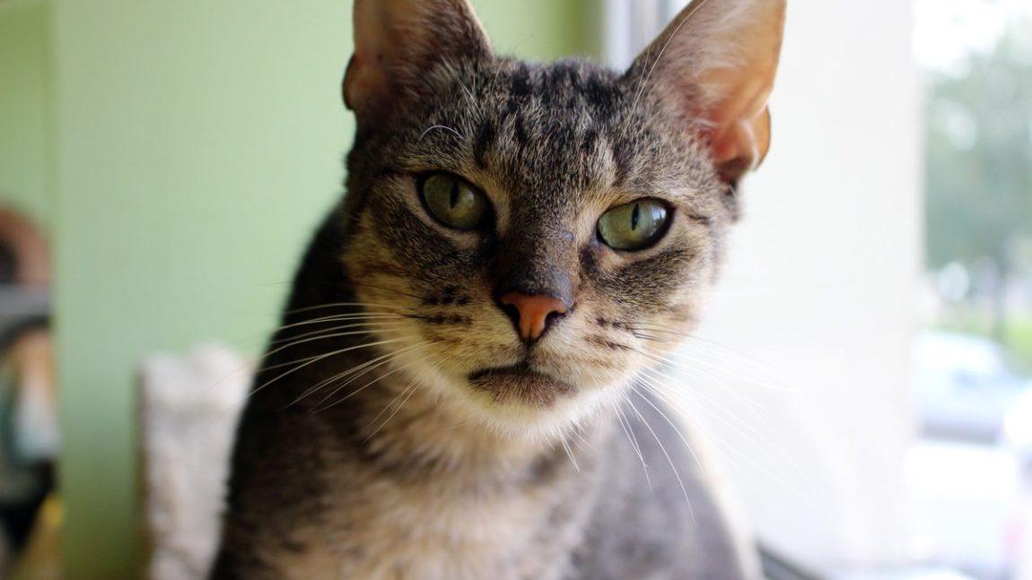 Madras – kot, któremu zapodział się świat…