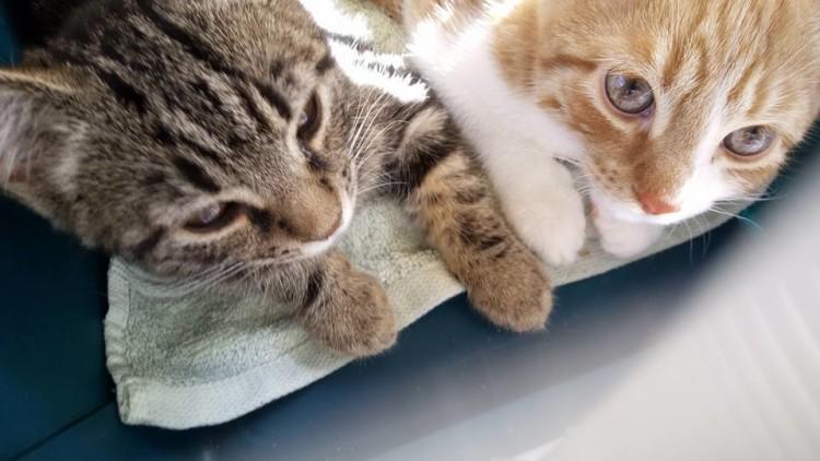 Gryzelda i Fifi- uroczy duet pojechał do domku!