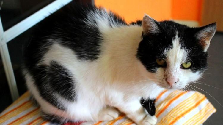 Staś – kot nerkowy