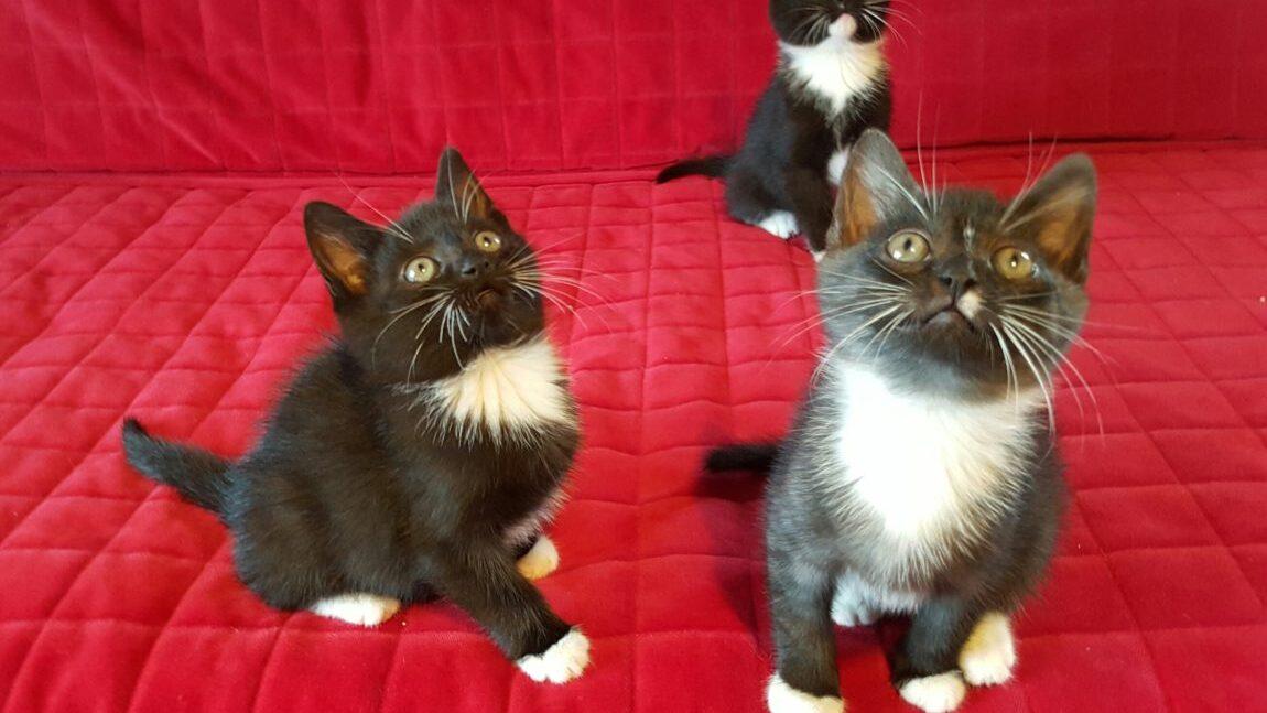 Gabryś i Tadzio – kociaki z pętli tramwajowej