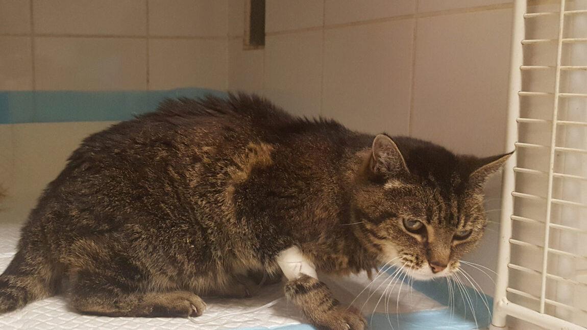 Zbieramy na leczenie kociej Babulki!