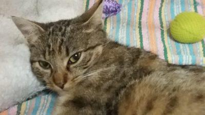 Aria – koteczka porzucona na działkach.