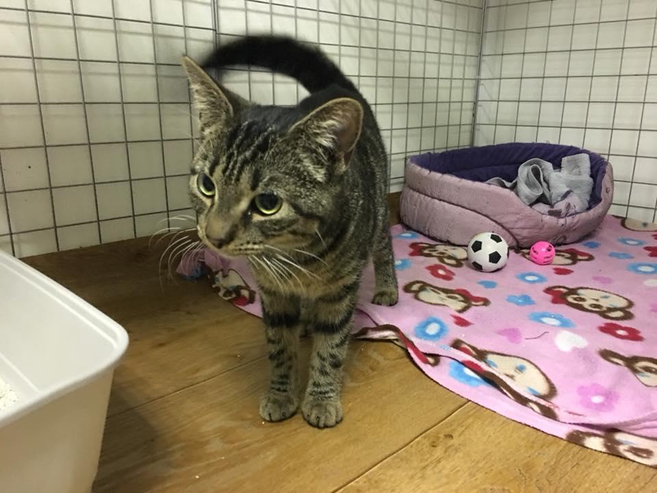 Mimi – kotka z piwnicy…