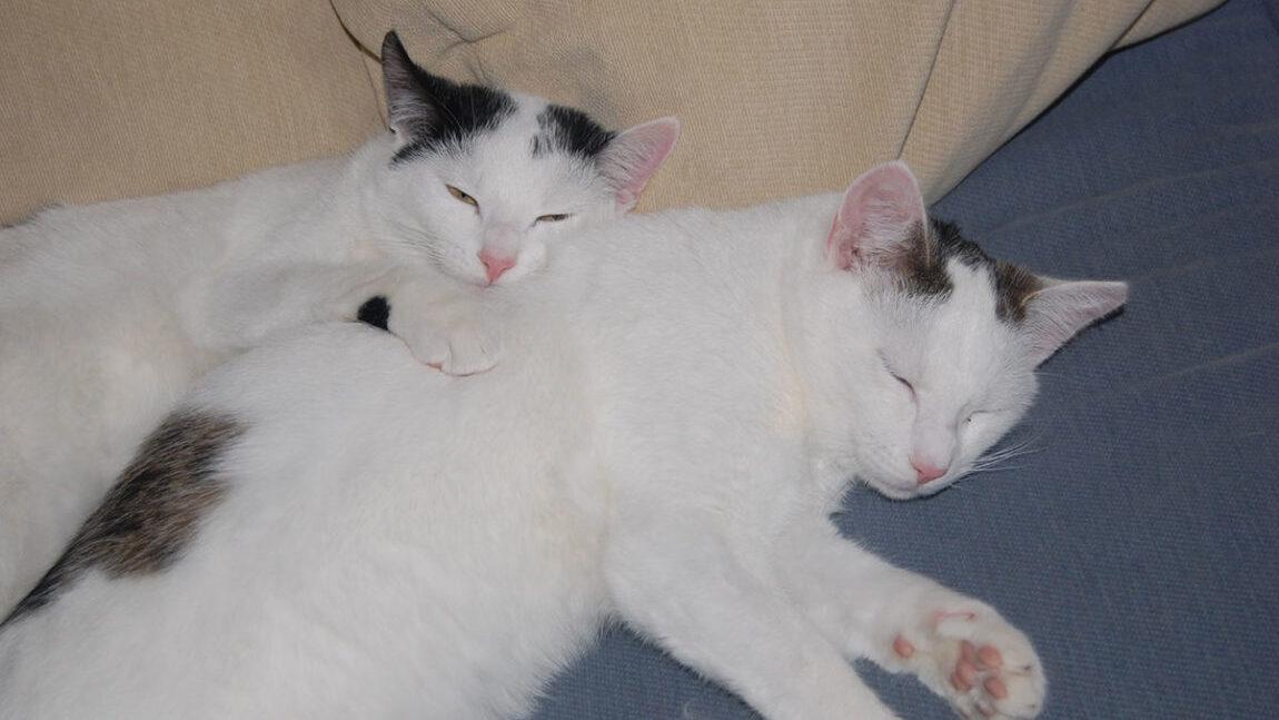 Kryształek i Perełka polecają się do adopcji!