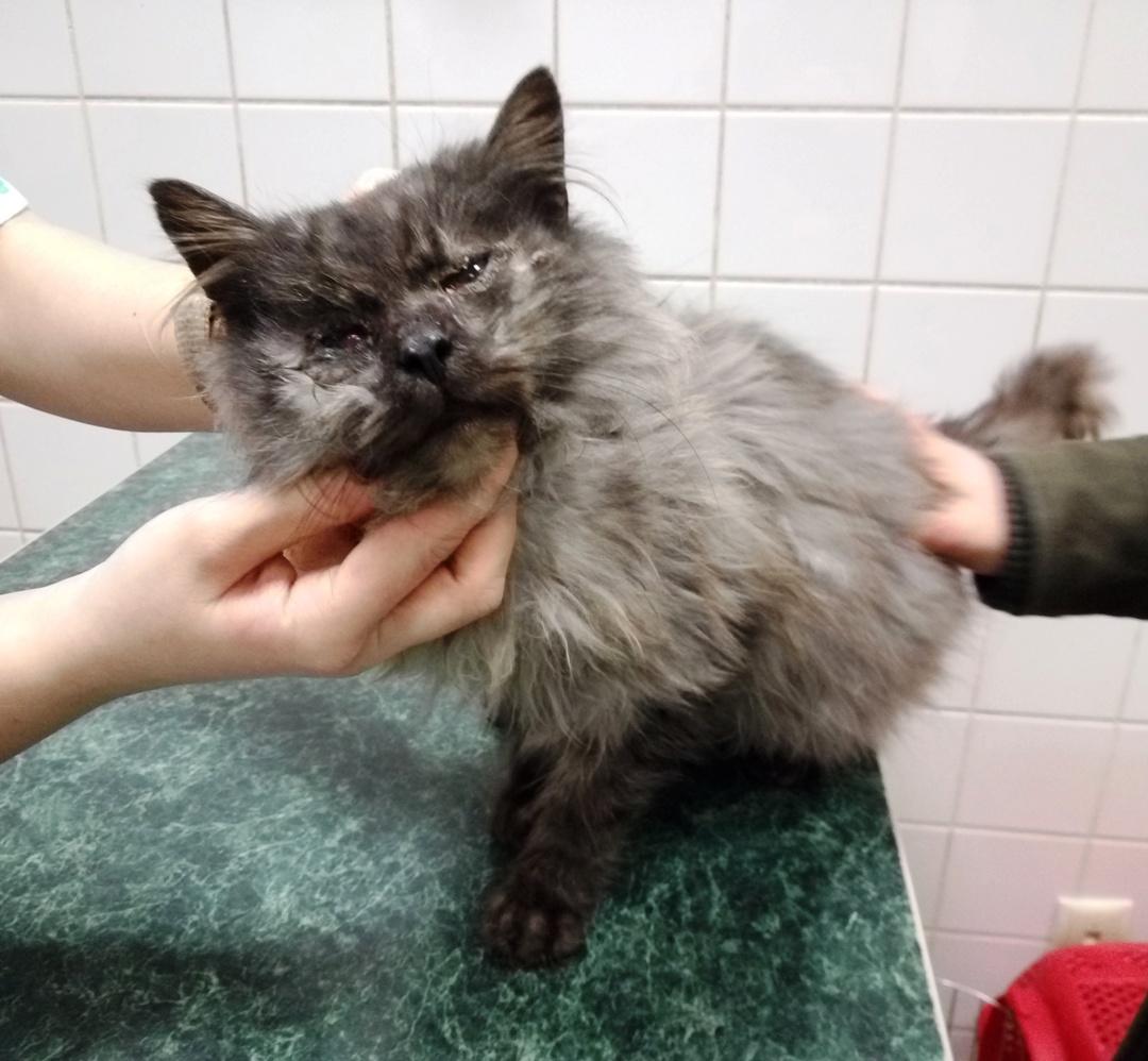 Jurij – dowód, że uroda kota nie chroni przed bezdomnością.