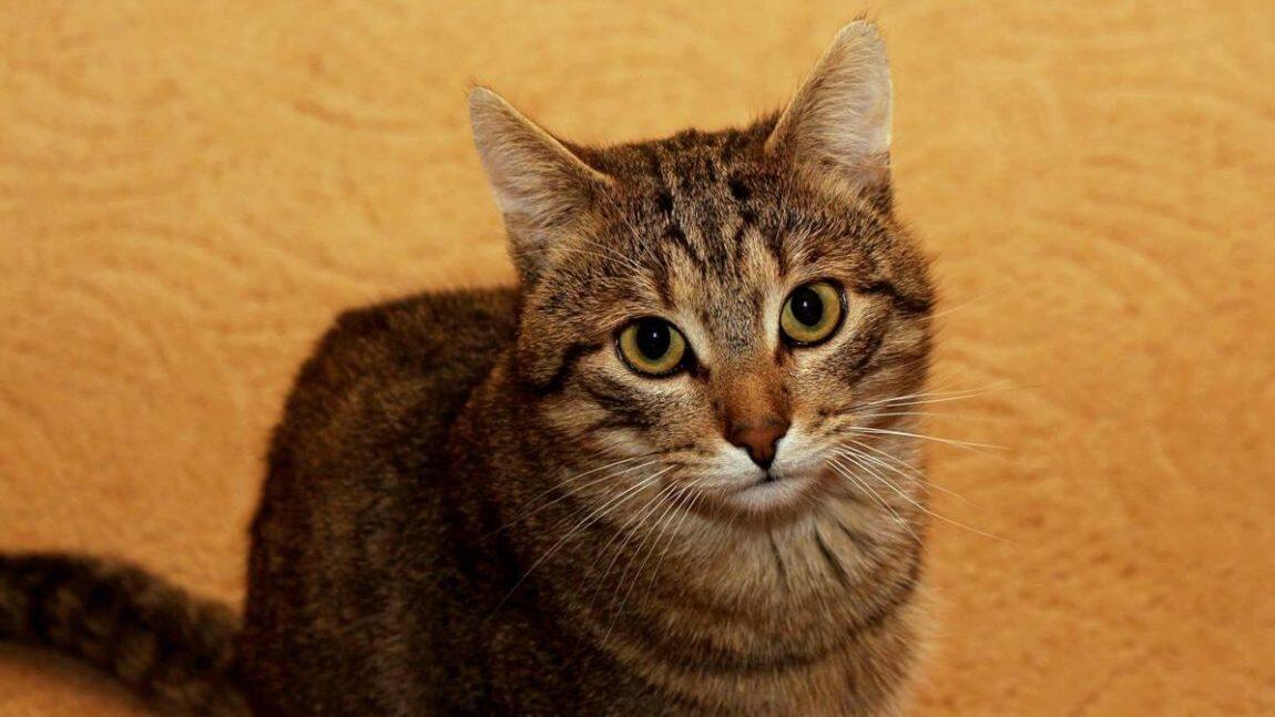 Kabi – wspaniały koci towarzysz