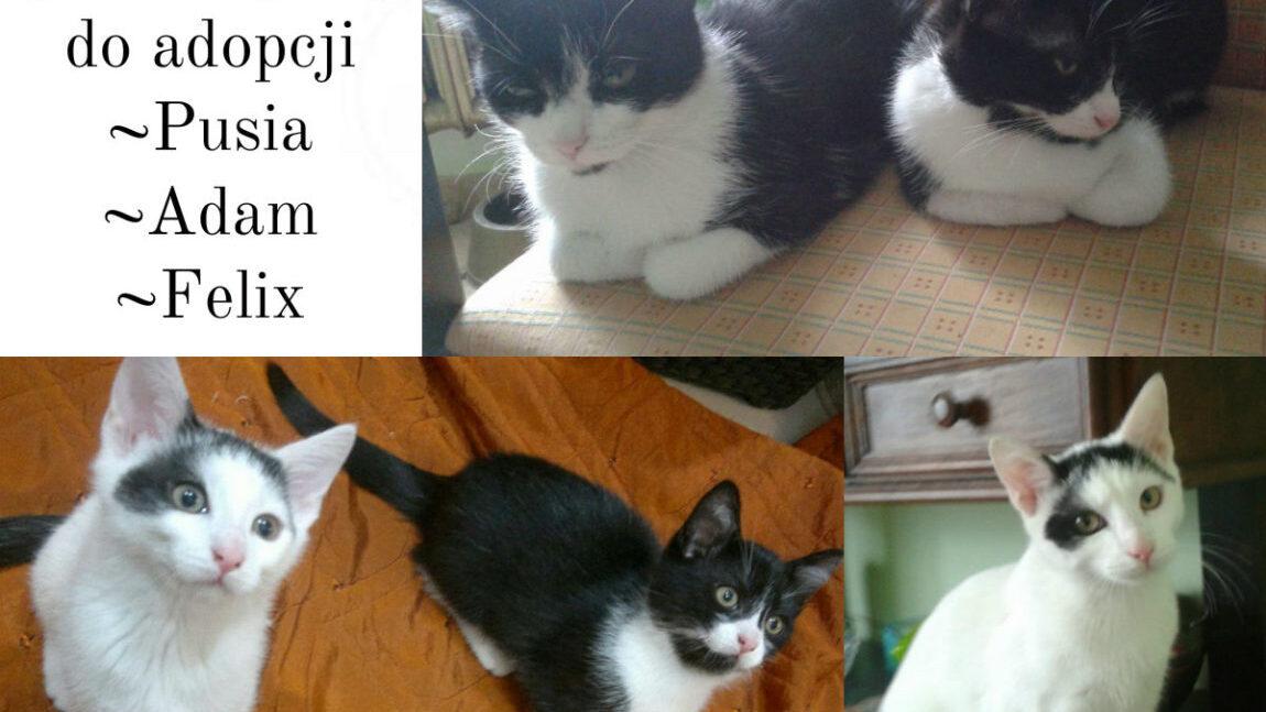 Pusia, Felix i Adam polecają się do adopcji!