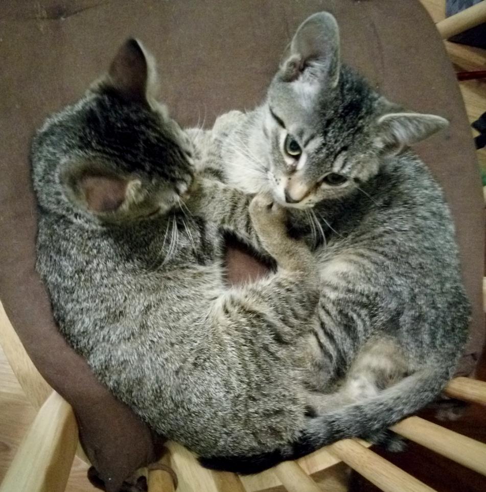 Muffin i Puffin- bezbronne kocięta wyrzucone na śmietnik :(