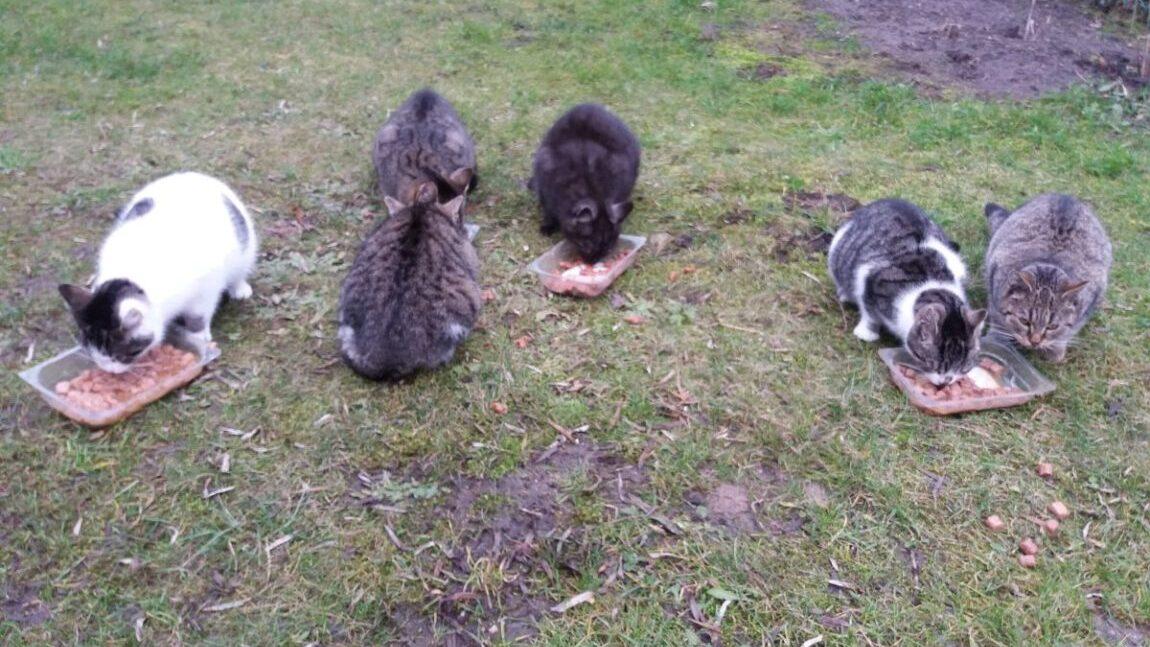 Apel o pomoc dla kotów wolnożyjących!