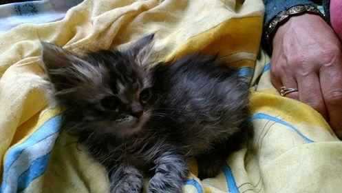 [Ogłoszenie grzecznościowe] 6 koteczek