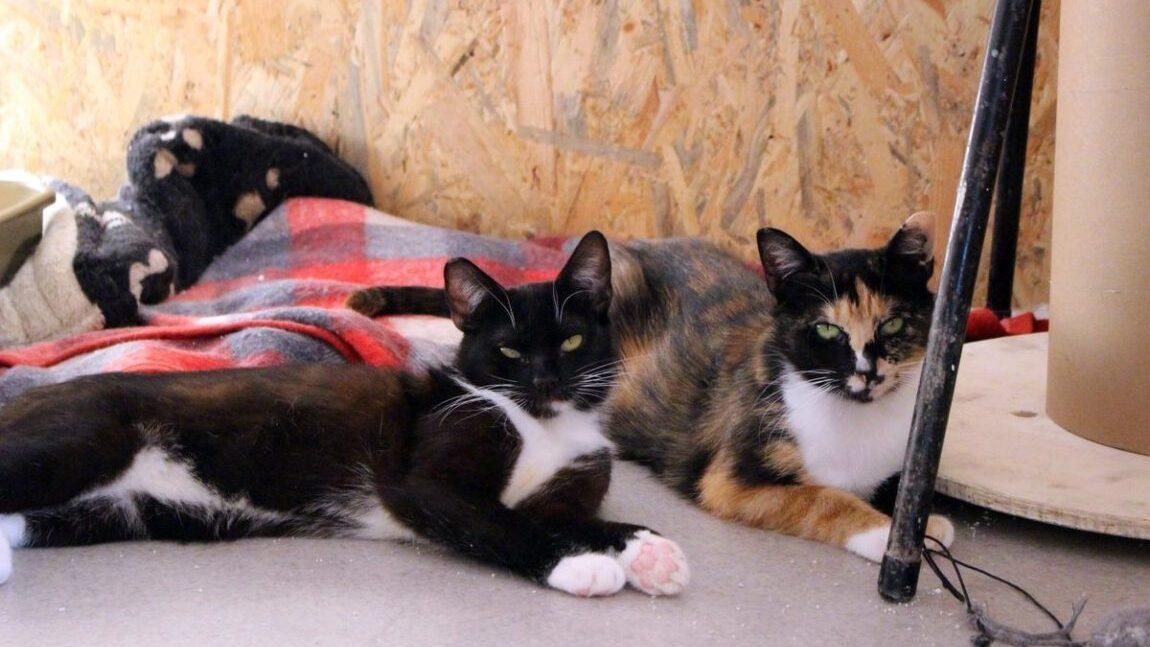 Bezpłatne sterylizacje kotów i psów