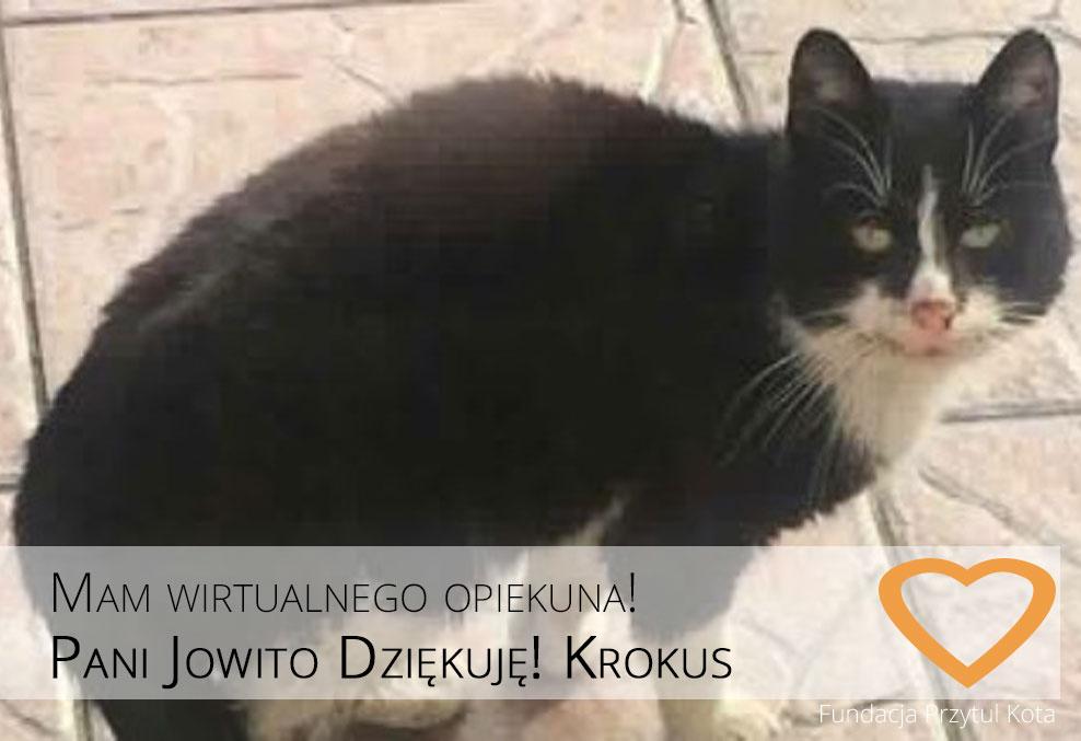 Krokus ma nowego Wirtualnego Opiekuna!