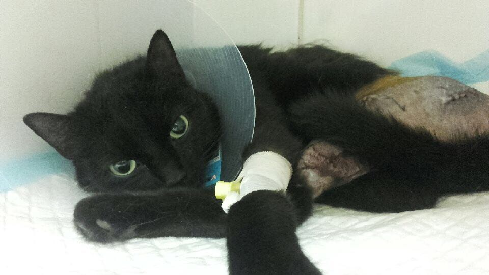 Nero – kotek ze schroniska już po operacji