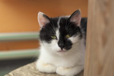 Nela – kotka kieszonkowa