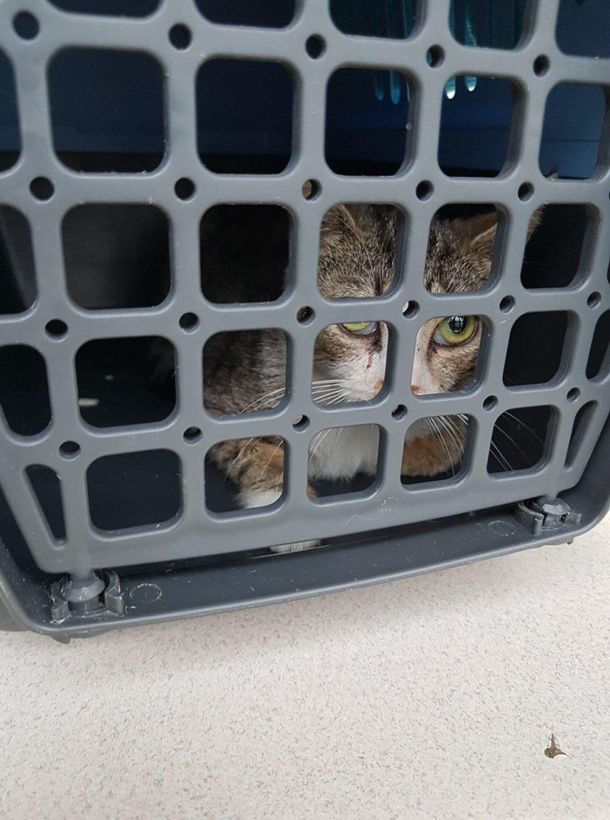 Dramat stada kotów ze Stoków – dzień czwarty.