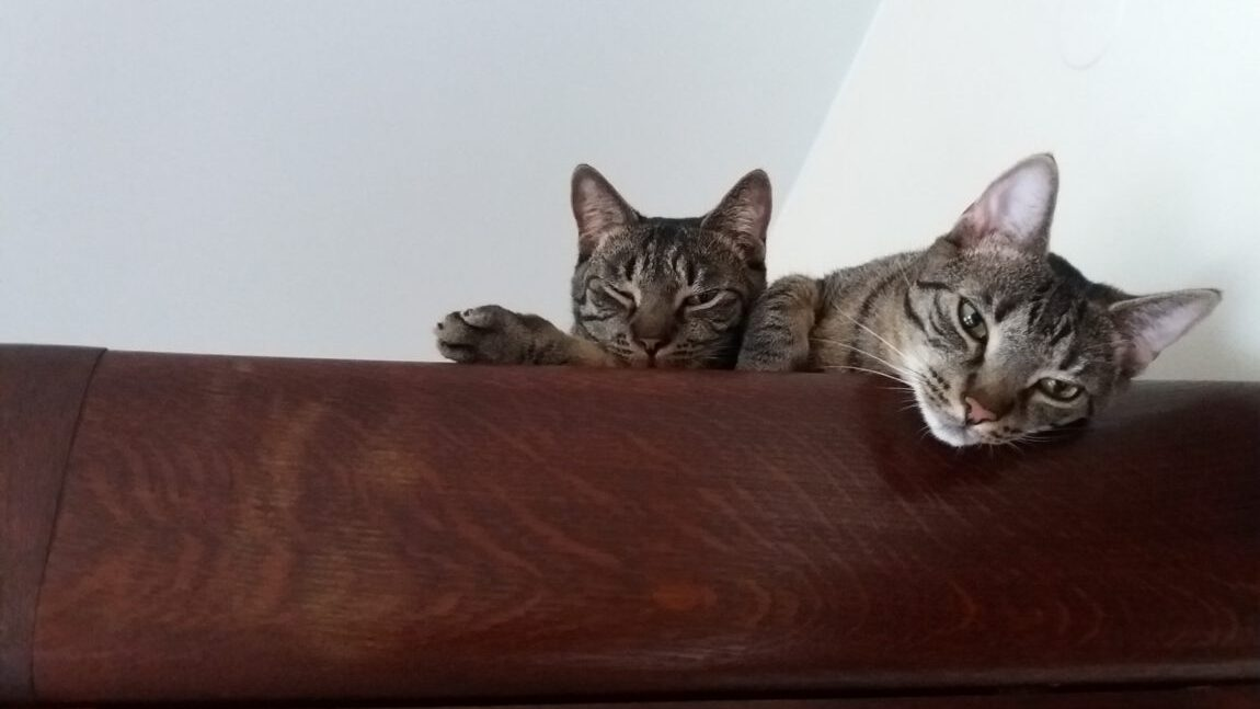 Pozdrowienia od Toli i Loli