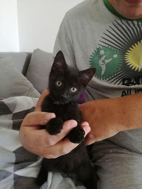 [Ogłoszenie grzecznościowe] Znaleziono kotkę