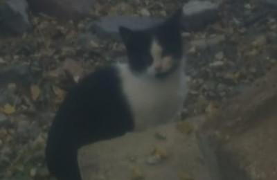 [Ogłoszenie grzecznościowe] Kociaki z Nadolnej
