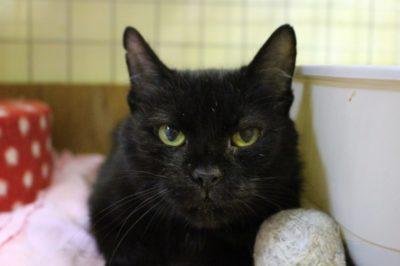 Nina – czarna pantera po wypadku i długiej rekonwalescencji