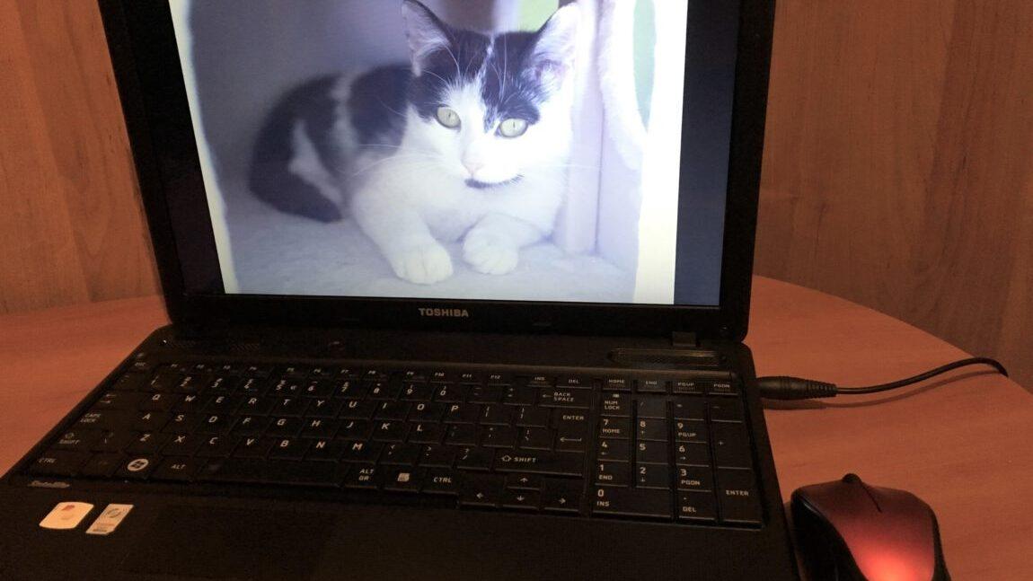 Podziękowanie za laptopa
