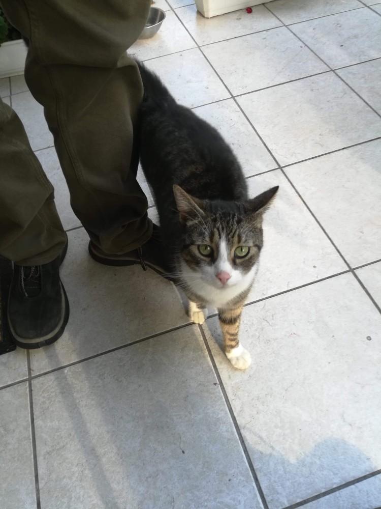 [Ogłoszenie grzecznościowe] Kot szuka domu!