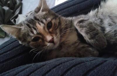 [Ogłoszenie grzecznościowe] 2 kotki szukają domu