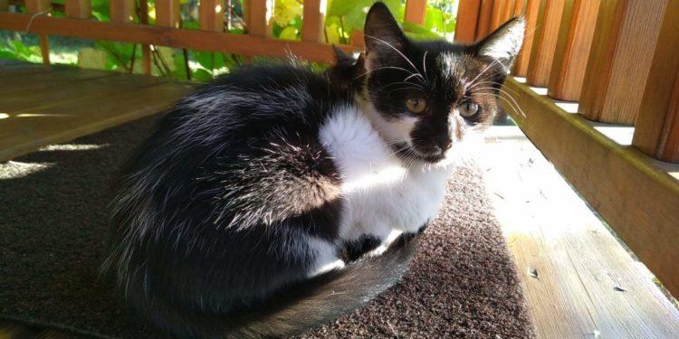 [Ogłoszenie grzecznościowe] 4-miesięczne kotki