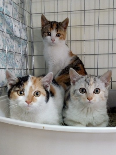 Jesienne kocięta – Lili, Werka, Gerda i Milo