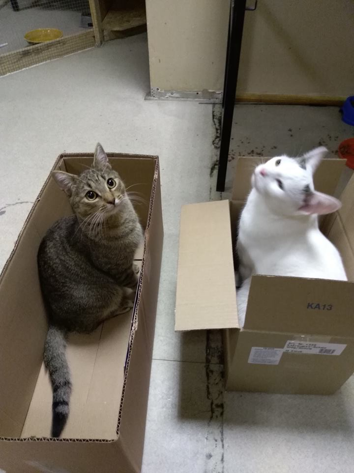 Koty i kartony