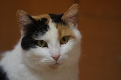 Miłka – kotka z pizzerii