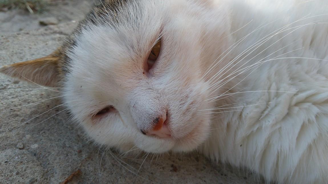 [Ogłoszenie grzecznościowe] Zaginął kot!