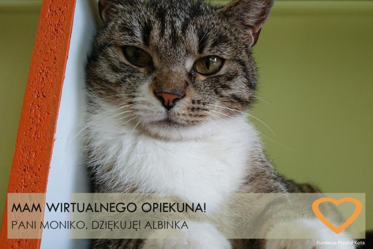 albinka_WA