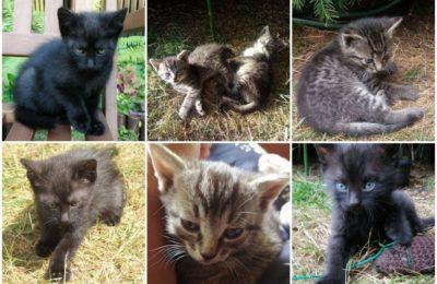 [Ogłoszenie grzecznościowe] Kocięta szukają domu
