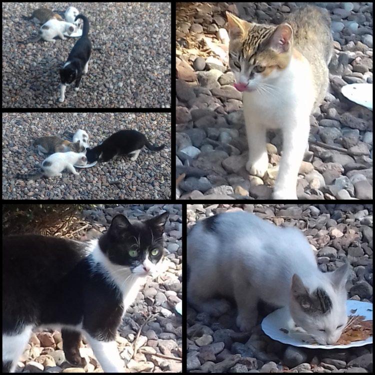 [Ogłoszenie grzecznościowe] Kocia rodzina szuka domów!