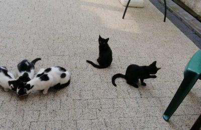[Ogłoszenie grzecznościowe] Trzymiesięczne kocięta szukają domu