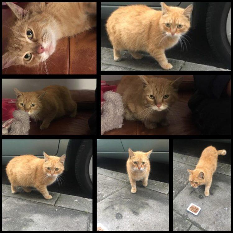 [Ogłoszenie grzecznościowe] Porzucona ruda kotka szuka domu