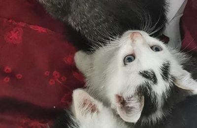 [Ogłoszenie grzecznościowe] Kocięta szukają domów