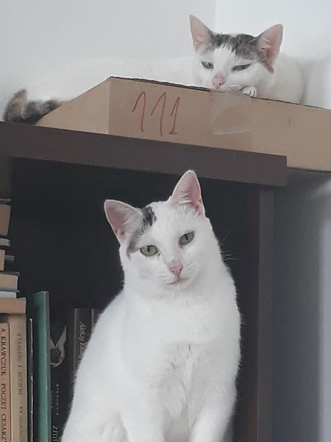 Lukrecja, Lobelia i Fadi pozdrawiają ze wspólnego domku
