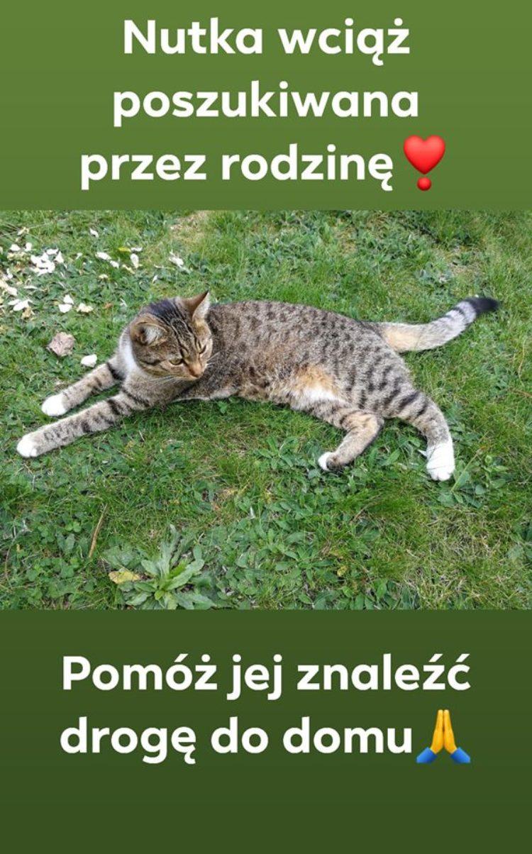 [Ogłoszenie grzecznościowe] Zaginęła Nutka!