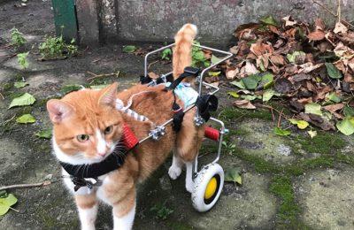 [Ogłoszenie grzecznościowe] Niepełnosprawny Rudzik szuka domu