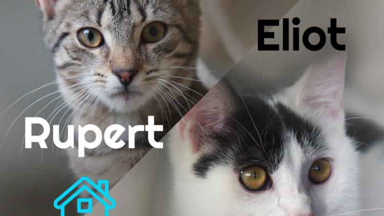 Eliot i Rupert w domkach!