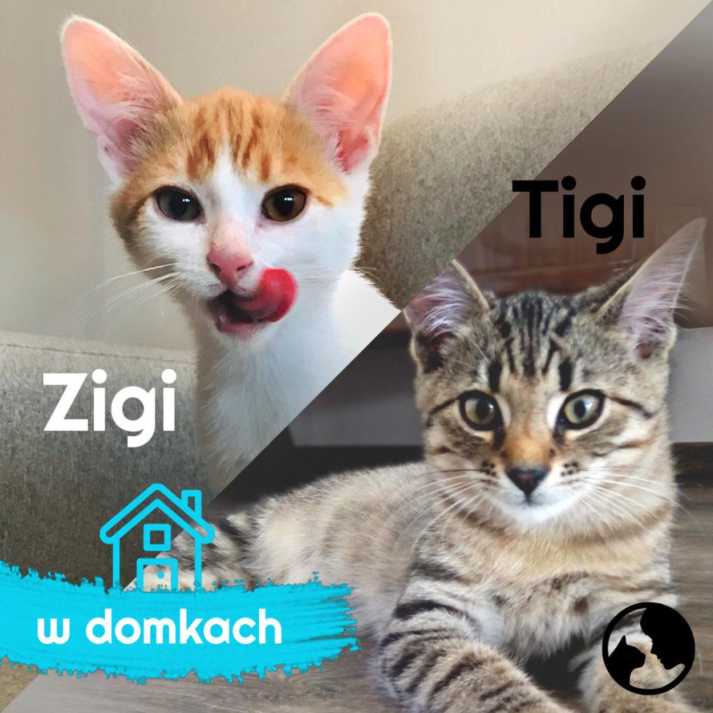 Tigi i Zigi w domku!