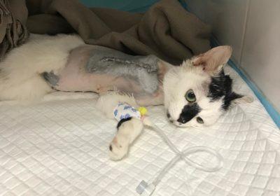 Szanta po operacji