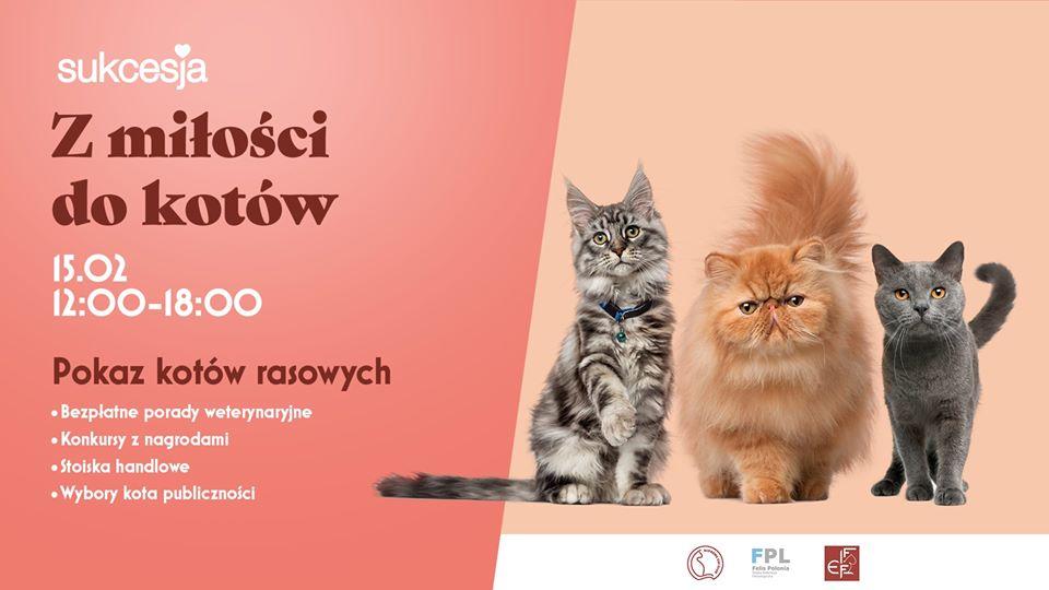Pokaz kotów rasowych z okazji Dnia Kota