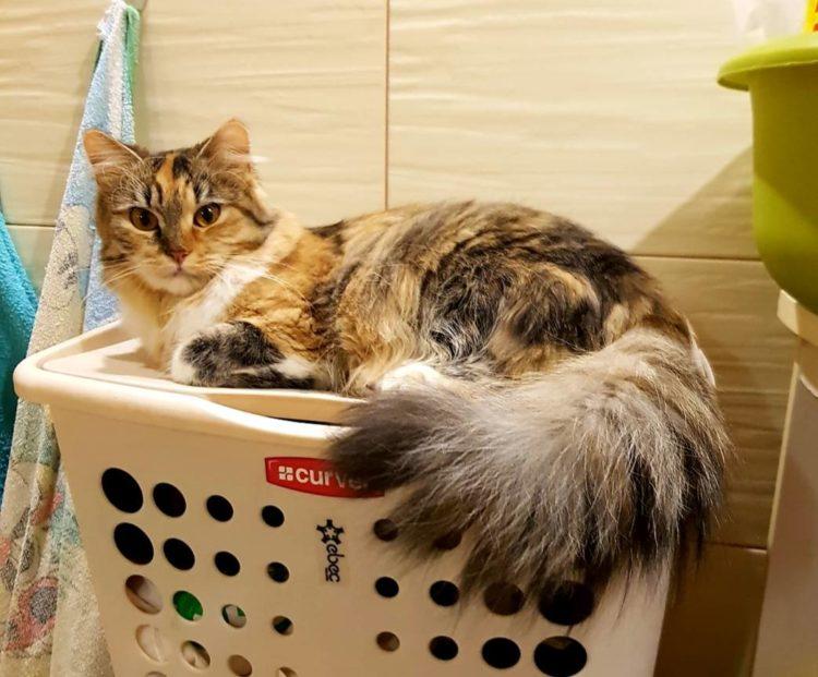 Zaginiona kotka – ogłoszenie grzecznościowe