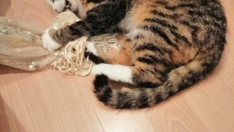Ogłoszenie grzecznościowe – młody kotek szuka kochającego domu!